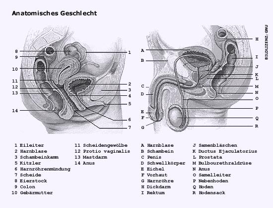 Pic_Anatomie_web.jpg
