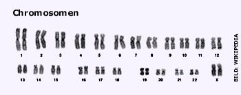 Pic_Chromosomen_web.jpg