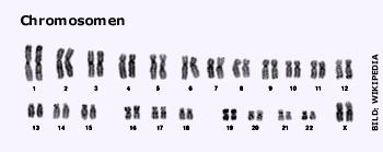 Pic_Chromosomen_web.jpg
